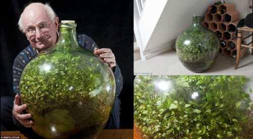 Пенсионер вырастил сад в закупоренной бутылке
