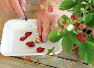 Как вырастить  садовую землянику из семян: